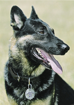 In loving memory of K9 Boss, Fairfax PD