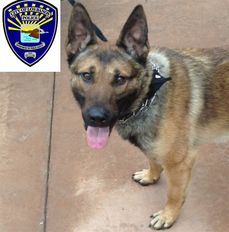 We need donations for Los Banos PD K9 Charlie and Maximus