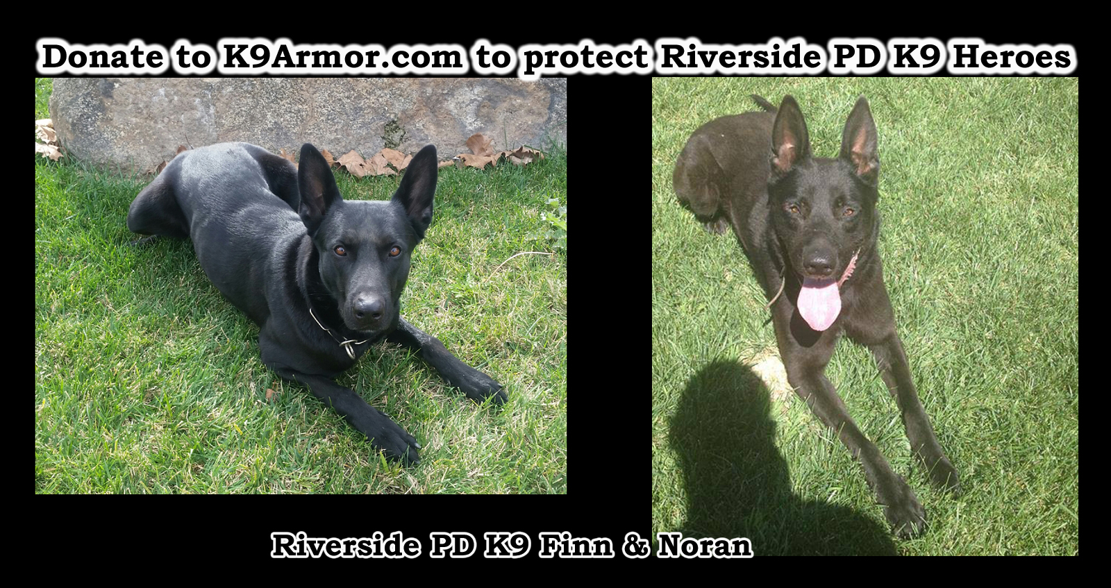K-9 Armor needs $875.00 for one more vest for Riverside PD K9 Finn and Noran