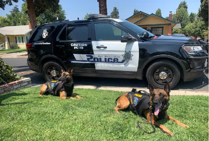 San Bernardino Police K9 Heroes K9 Bexter and Falco wearing their K9 Armor vests
