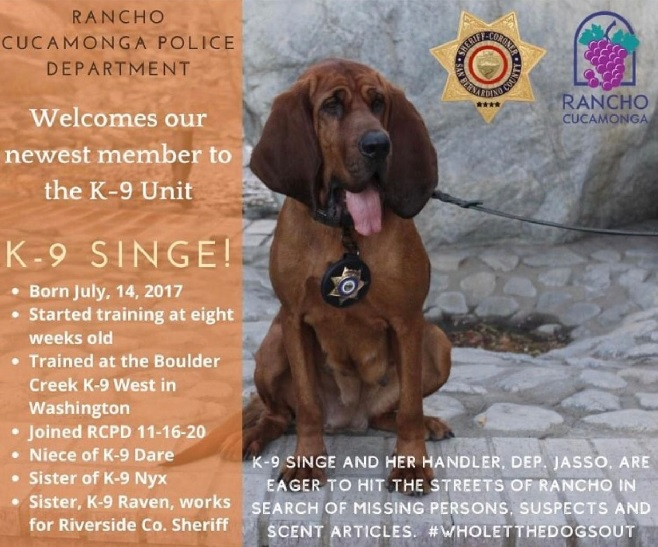 Donate to protect San Bernardino Sheriff K9 Singe