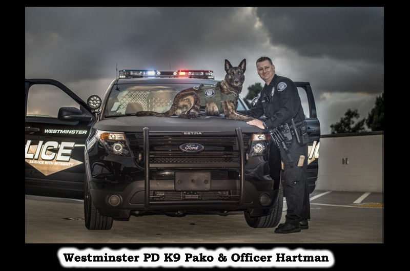 Thank you to the anonymous angel who donated to K9Armor.com to protect Westminster PD K9 Pako